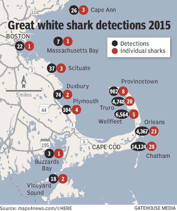No Surprise- Great Whites Like The Cape