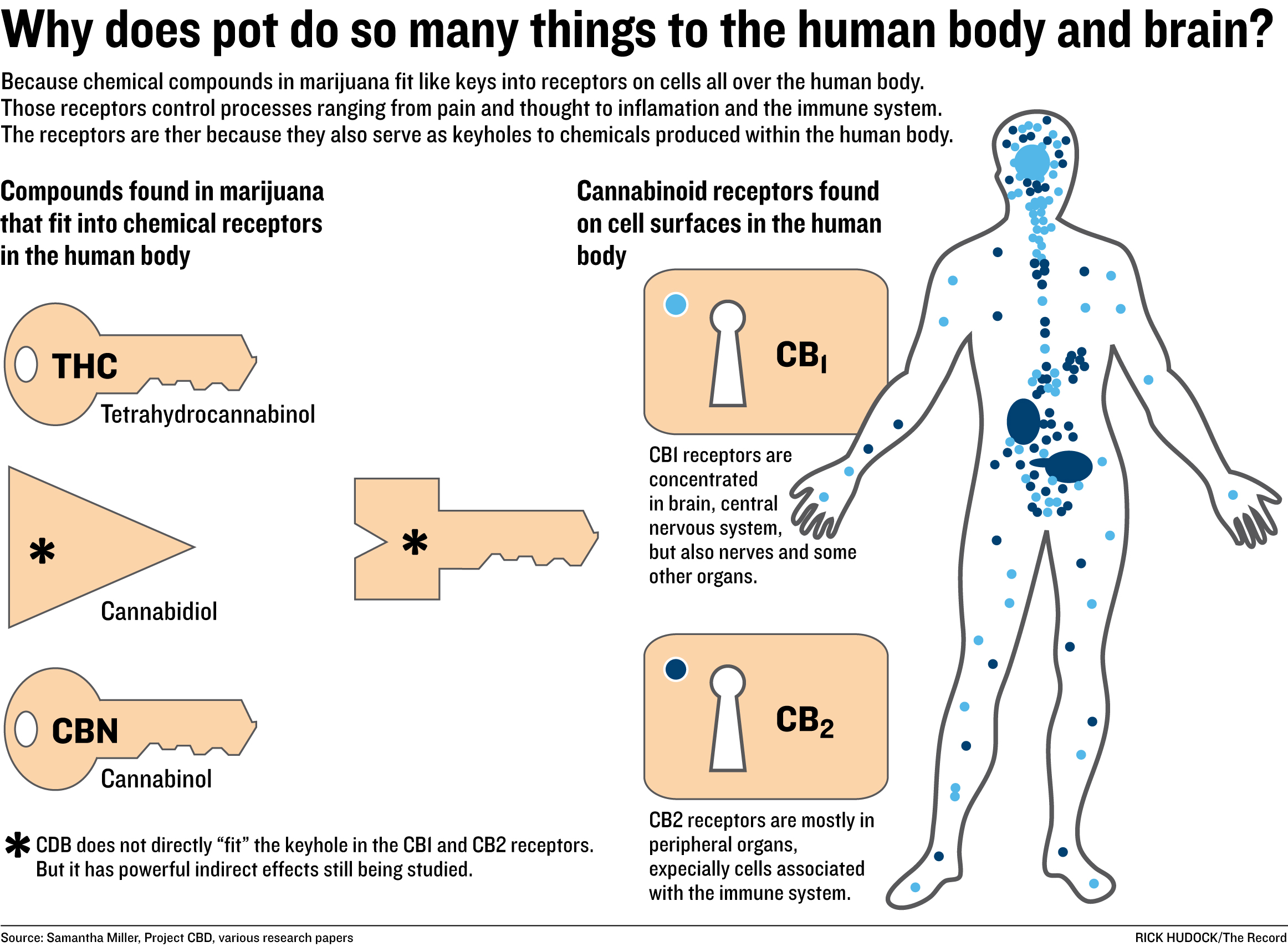 cannabis effects on human beings